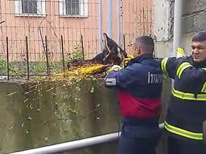 Bacağına demir saplanan köpek, itfaiye ekiplerince kurtarıldı