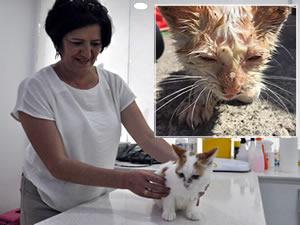 Kızgın yağın içine düşen kedi, hayvanseverlerin desteğiyle yaşama tutundu